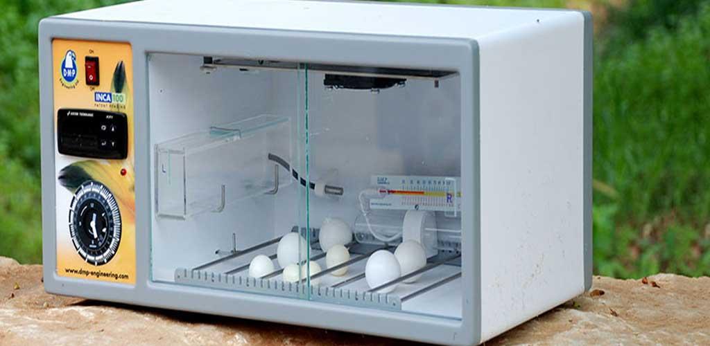 incubadora para huevos de pajaros